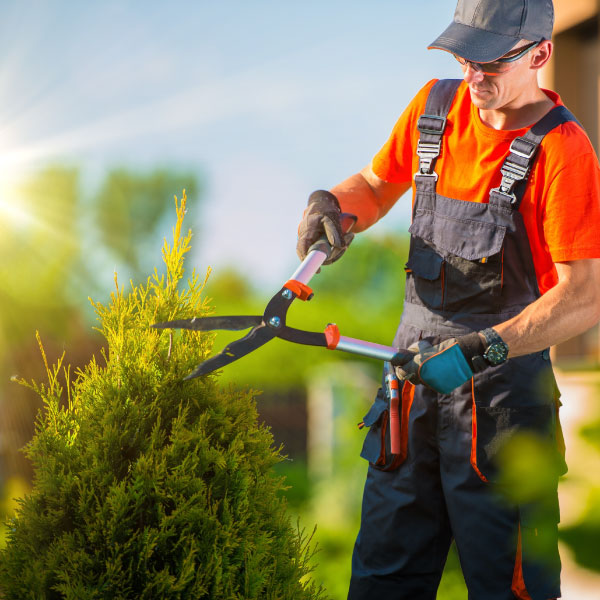 sec-anparo-usavrsavanje-za-vrtlar